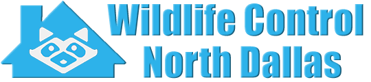 North Dallas Wildlife and Animal Removal